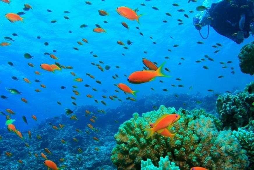 How to have fun in Puerto de Pollensa: Diving